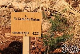 Al Barouk: The Chouf Cedar Reserve and its Surroundings