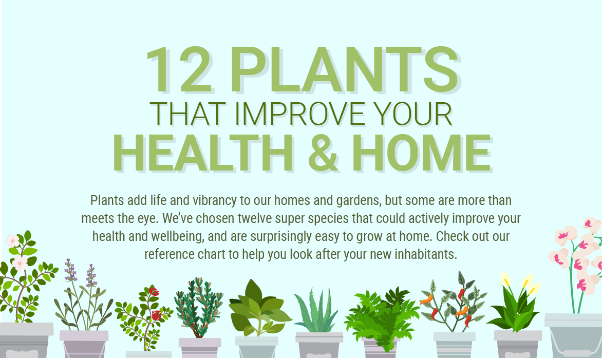 12 plants for improving your health home nogarlicnoonions restaurant food and travel - Plants can improve ambience home ...